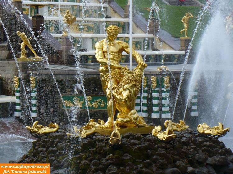 Słynna rzeźba pt.Samson rozdzierający paszczę lwa. Oczywiście cała zeszczerego złota.