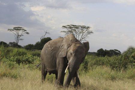 Zobacz słonie wTanzanii